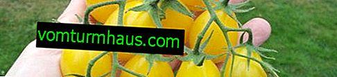 """Tomates """"Honey Drop"""": descripción, cultivo, técnica agrícola"""