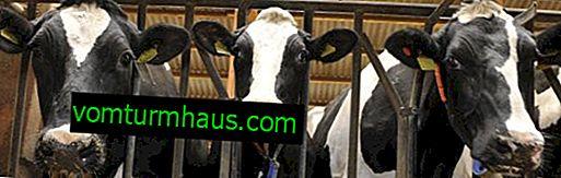Ako vyrobiť stodolu pre kravy