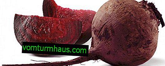 Barbabietole rosse: proprietà utili e controindicazioni
