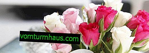 Как да удължите живота на нарязаните рози у дома?