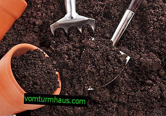 Hur man väljer och odlar mark för zamioculcas