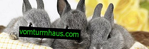Kaj storiti, če zajčje oči gnjavijo