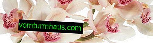 Орхидеи и вредители