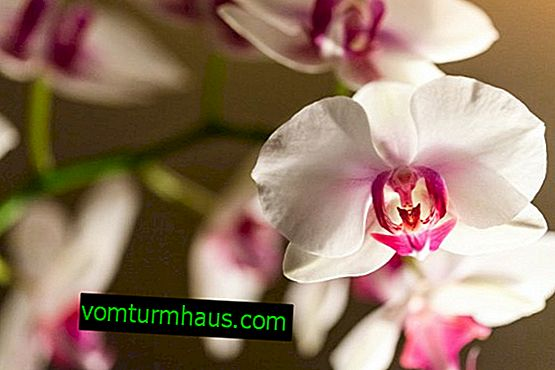 Cómo elegir y cómo hacer macetas de bricolaje para orquídeas