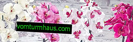 Pflege einer Orchidee nach der Blüte