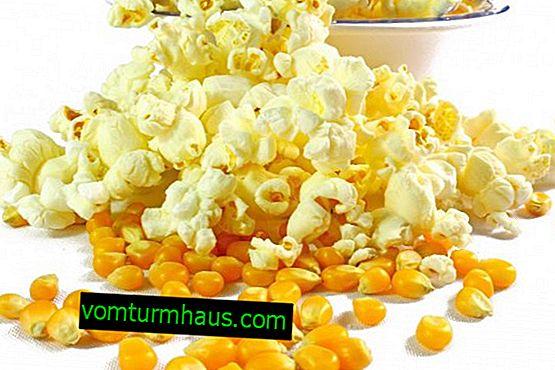 Popcorn majs