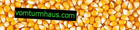 Foder (foder) majs