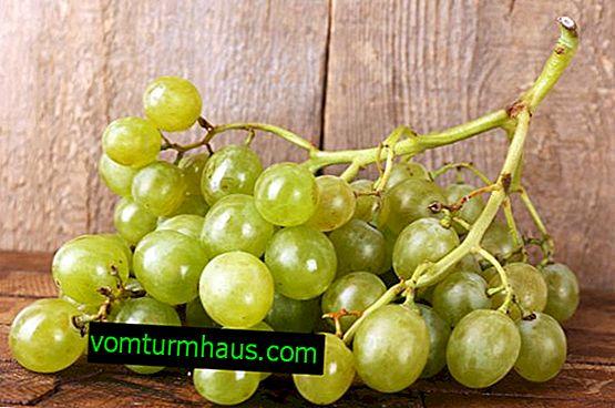 Białe winogrona: korzyści zdrowotne i szkody, wartość odżywcza i zawartość kalorii