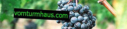 Comment nourrir les raisins à l'automne