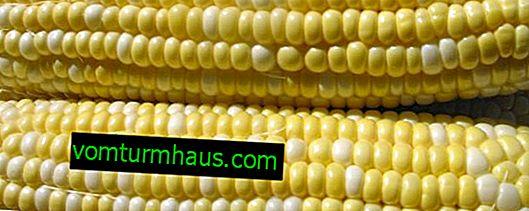 Hur man knipar majs på kolven hemma