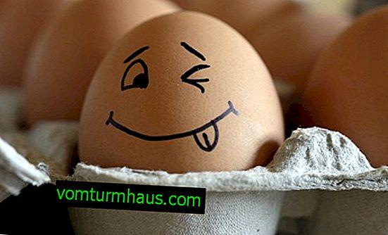 Kury składają jaja bez skorupek: dlaczego i jak to naprawić?
