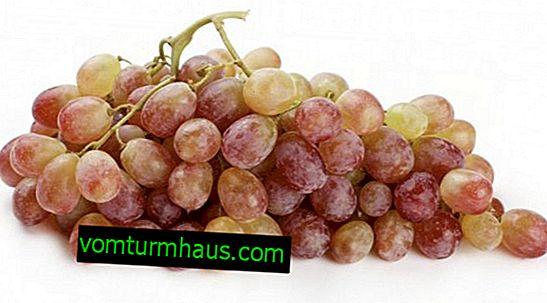 Odmiana winogron Typhi - różowa i biała
