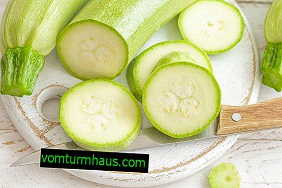 Hvad er nyttig juice fra zucchini til den menneskelige krop