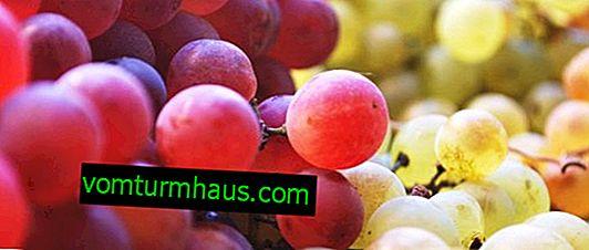 Les raisins sont une baie ou un fruit.