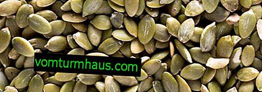 Koristne lastnosti in škoda semen bučk