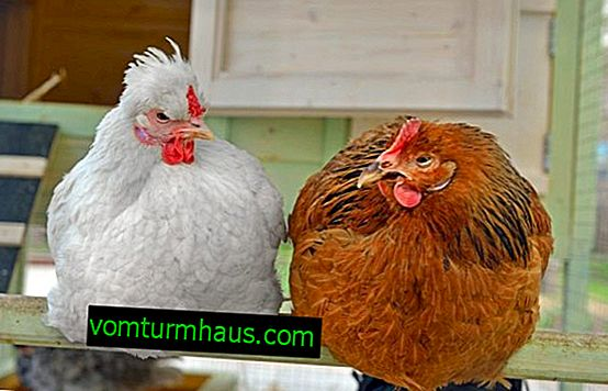 Sådan bygger du et lille hønsehus til 5 høner