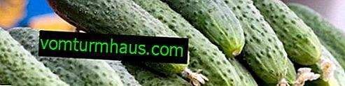 Uhorky Paratunka f1: opis odrody, pestovateľské a ošetrovacie vlastnosti