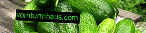 Lukačovské okurky: popis, vlastnosti pěstování a péče