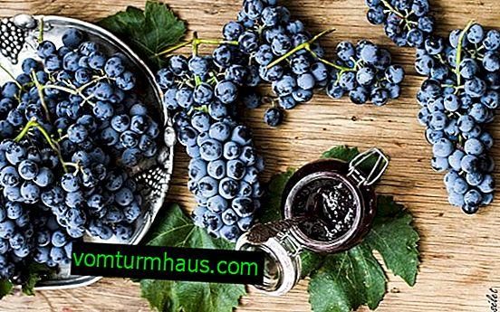 Qué se puede preparar con uvas Isabella, excepto vino