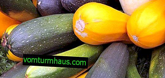 De délicieuses recettes pour préparer des courgettes sans stérilisation