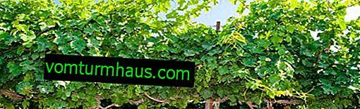 De bedste metoder og ordninger til dannelse af druer