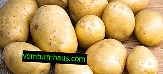 Krompir Golubizna: opis sorte, okus, predvsem gojenje in nega