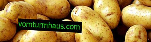 Krompir Žukovski: opis sorte, gojenje in nega