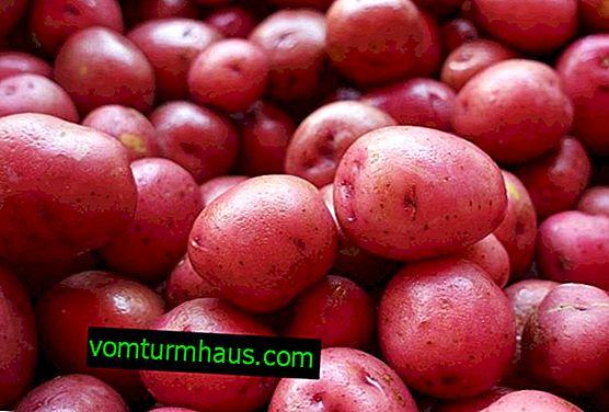 Krompir Lyubava: opis, gojenje in nega sorte