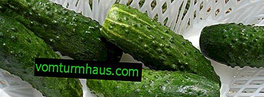 ¿Por qué los pepinos son suaves durante el crecimiento y después de la salazón?