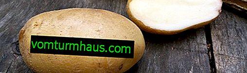 Kartoffellorch: Beschreibung und Merkmale der wachsenden Sorten