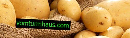 Potatoes Queen Anna: descripción de la variedad, características de plantación, cultivo y cuidado