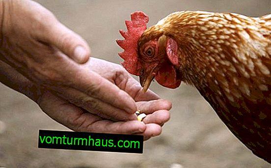 Quali vitamine dare ai polli