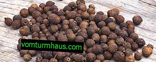 Propiedades y características útiles de la aplicación de pimienta de Jamaica.