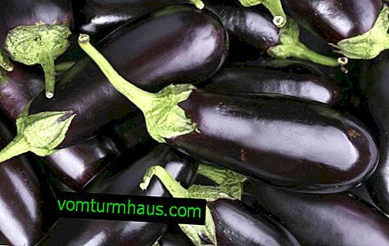 Caractéristiques de l'utilisation d'aubergine dans la goutte