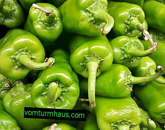 Zelena ljuta paprika: korisna svojstva i šteta, kalorijski sadržaj