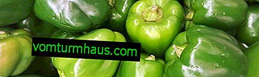 Pimiento verde: beneficios, daños y características de uso.