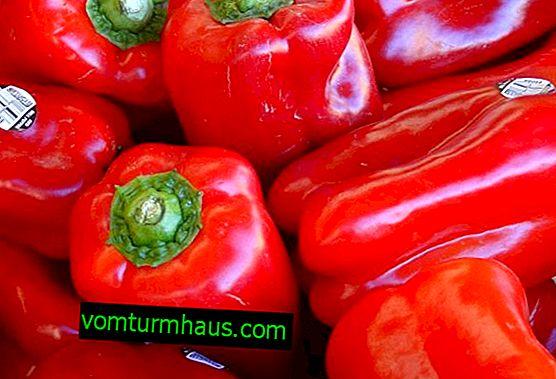 Pepper Denis: charakterystyka uprawy i plonu