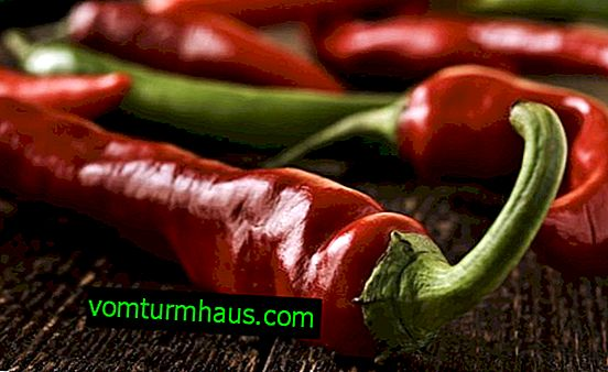 Sådan marineres instant chili-peber, uden sterilisering, med eddike, med olie