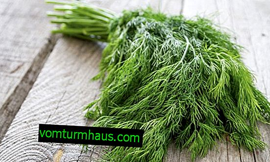 Useful properties and harm of dill for men's health