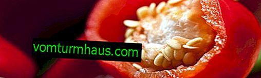 De bästa pepparkärnorna: funktioner i insamling, lagring och odling