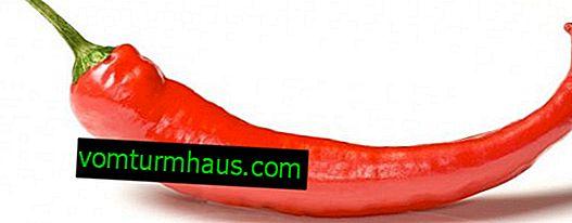 Chili-Pfeffer: Nutzen für die Gesundheit und Schaden, tägliche Einnahme
