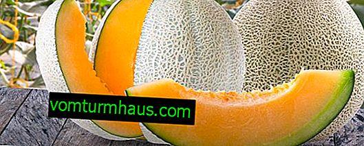 Il melone profuma di acetone perché: è possibile mangiare