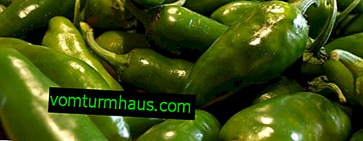 Jalapeno pepper: photo and description - benefit and harm