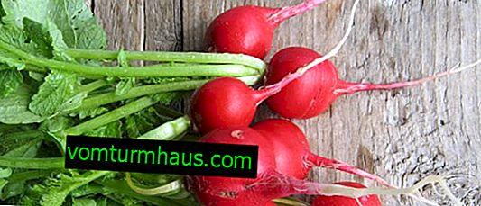 Radis: avantages et inconvénients pour la santé