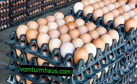 Intervallo di temperatura dell'incubatrice per uova di gallina