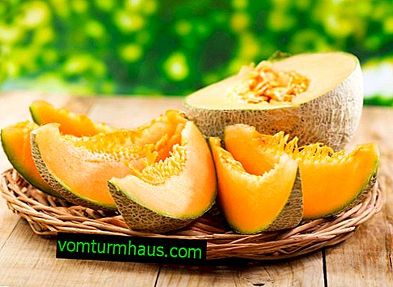 Comment choisir un délicieux melon: conseils pratiques