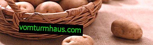 Patata Ivan da Marya: características y descripción de la variedad, métodos de cultivo.