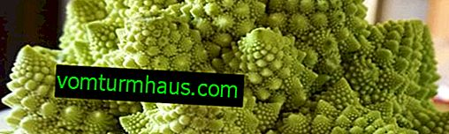 Cabbage Romanesco: features of cultivation and care