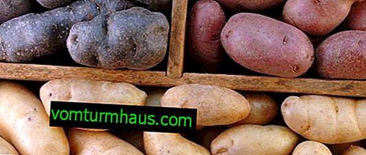 Opbevaring af kartofler i køleskabet: metoder og nyttige anbefalinger