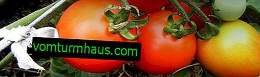 Tomat Tsar Bell: egenskaper och avkastningssorter